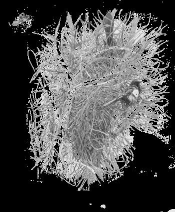 Un nid  d'épineux secrets - #1