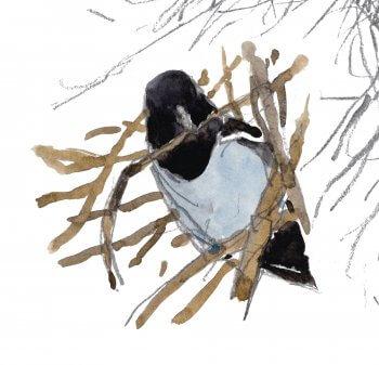 Un nid d'épineux secrets - La Salamandre