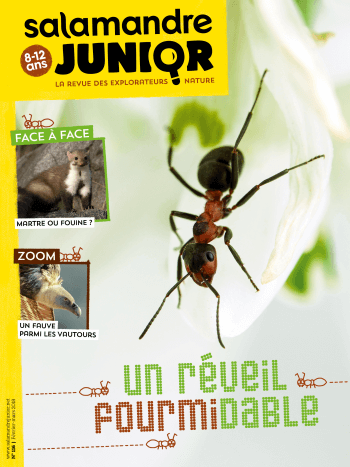 Couverture de La Salamandre Junior n°116