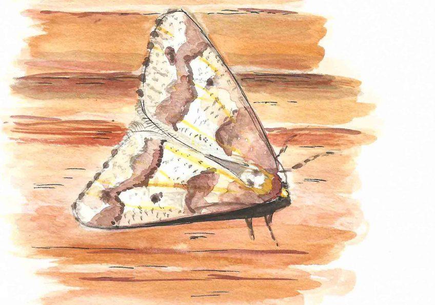 Pas frileux le papillon - La Salamandre