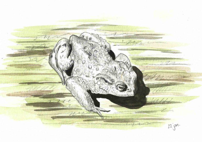 Un temps de crapaud - La Salamandre