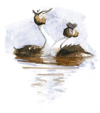 Flamenco synchro - La Salamandre