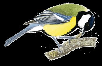 Fabriquez une caméra cachée pour filmer les oiseaux de la mangeoire