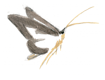 Espèces invasives - La Salamandre