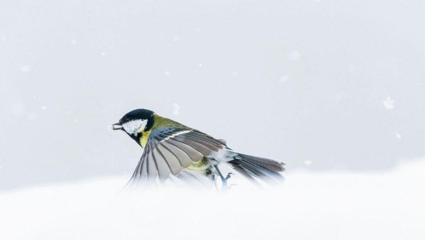 Oiseaux : Réalisez un scoop animalier - La Salamandre