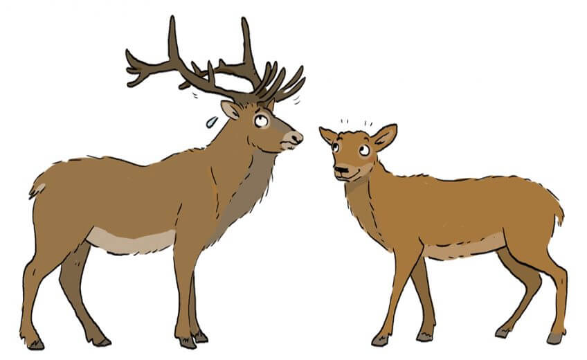 Les cerfs et le bois