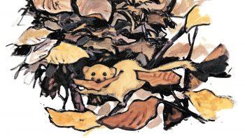 Le muscardin trouve en forêt tout ce qu'il faut pour construire son nid. Il lui arrive aussi de s'installer dans les marais: il coince alors ses boules d'herbes sèches entre les roseaux ou les touffes de joncs.