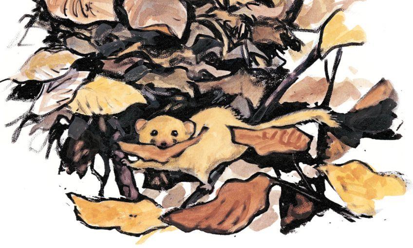 Muscardin, le gîte dans le couvert - La Salamandre