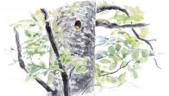 Les nids dans les vieux trous de pics passent inaperçus. Des suivis de muscardins par radiotélémétrie ont pourtant révélé que c'est la situation que ces rongeurs préfèrent.