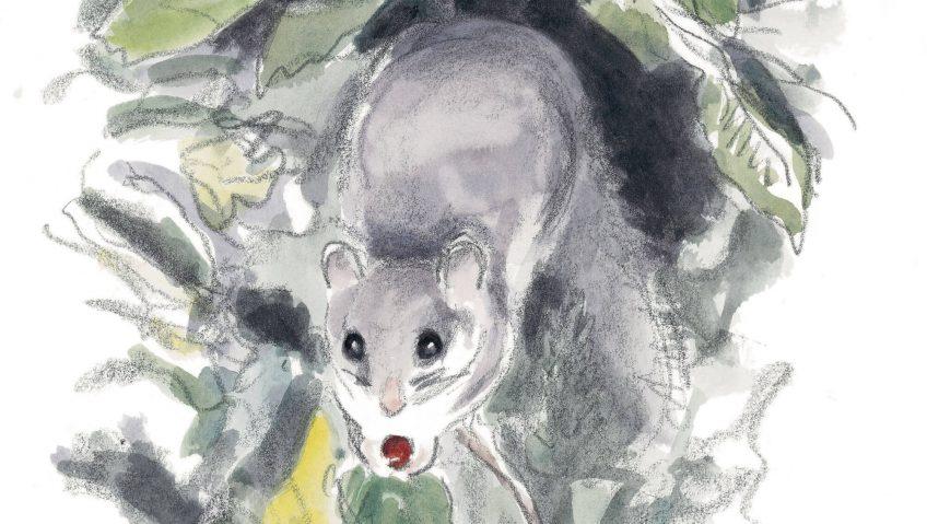 Vie de loir : manger ou être mangé - La Salamandre
