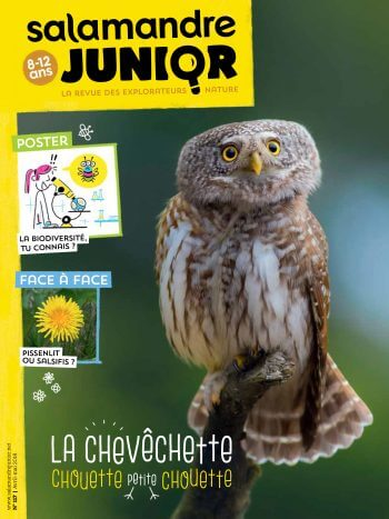 Couverture de La Salamandre Junior n°117