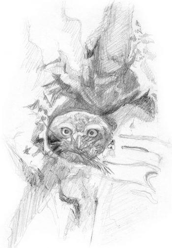 Les chevêchettes avec Pierre Baumgart - La Salamandre