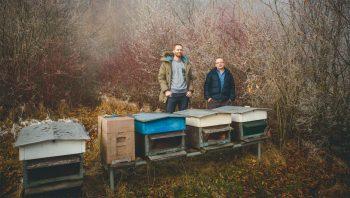 Le numérique  au secours des abeilles - #1