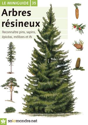 miniguide : les arbres résineux