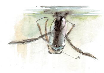 La mare mystérieuse et ses insectes - La Salamandre