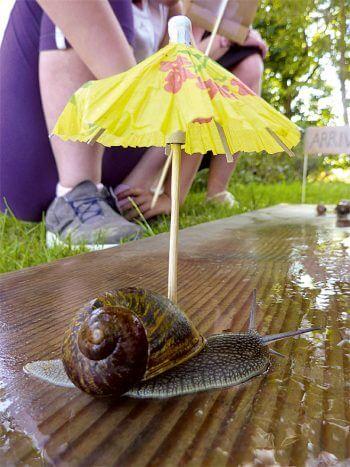 Organisez une course d'escargots ! - La Salamandre