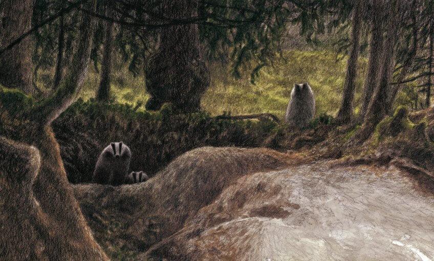 Les blaireaux et leur terrier