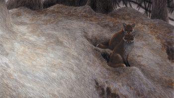 Au Grand Terrier, nuit du 27 au 28 mars 2002 A 19 h 15, deux renards sortent d'un trou «du bas». Ils bâillent, s'asseyent un instant et puis s'en vont. Belle ambiance, superbe lune mais point de blaireau. Je rentre vers 5 h du matin à l'heure où dans le ciel Jupiter lui aussi se couche.