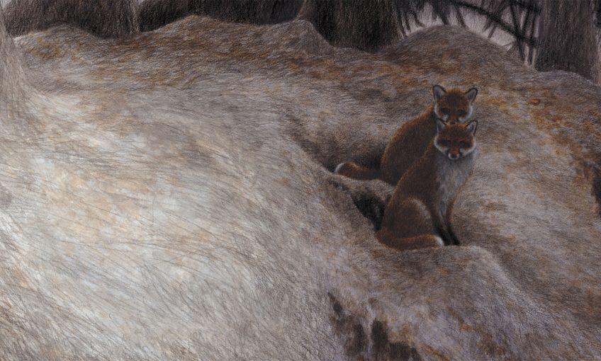 dessin de deux renards sur leur terrier