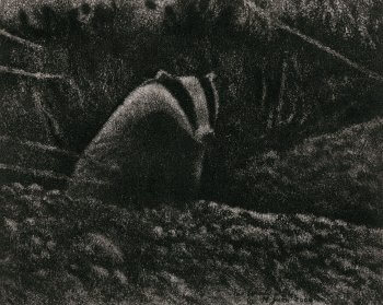 dessin de blaireau