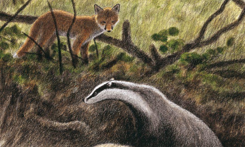 dessin d'un renard et d'un blaireau