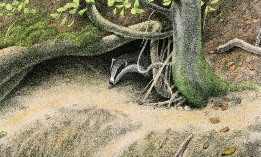 dessin d'un blaireau sortant de son terrier