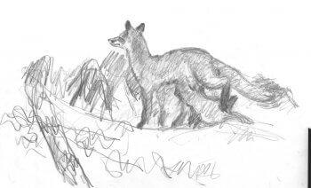 dessin d'un renard