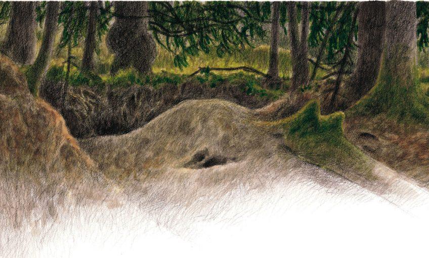 dessin d'un terrier de blaireau