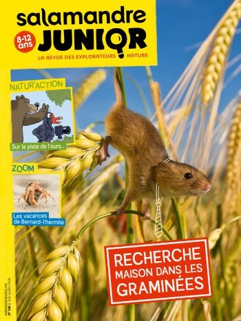 Couverture de La Salamandre Junior n°118