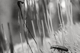 A portée de main Dans cette mousse charnue Toute la forêt / © Vincent Delfosse