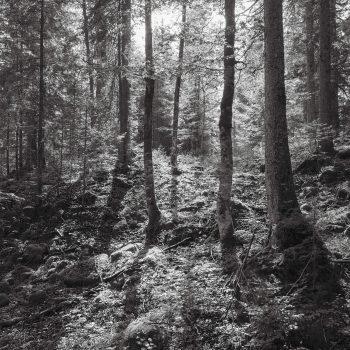 L'appel de la forêt - #1