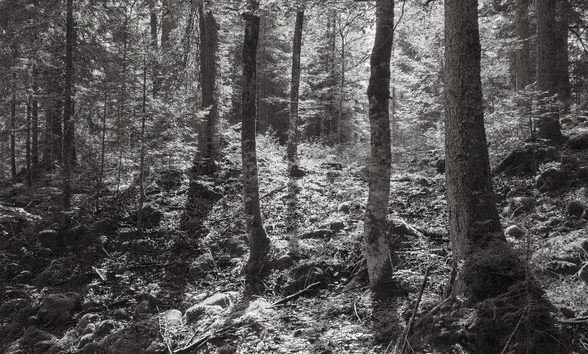 Risoux, l'appel de la forêt, le livre - La Salamandre