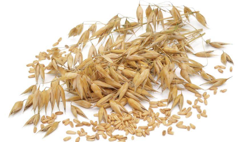 Grains de céréales - La Salamandre