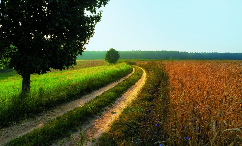 Prairie sèche, roselière ou champ de blé : quartier de graminées