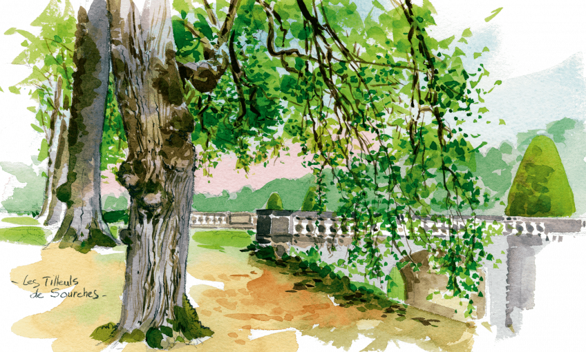 dessin d'un parc avec un tilleul