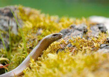 Fabriquez un solarium pour les orvets - La Salamandre