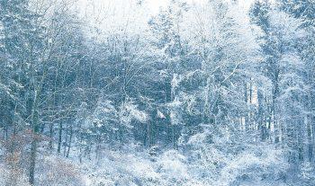 Désirée à Noël, crainte en ville, attendue dans les stations, la neige cristallise tous les enjeux de notre hiver.