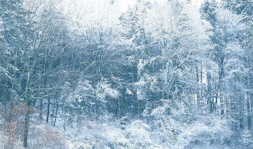 Désirée à Noël, crainte en ville, attendue dans les stations, la neige cristallise tous les enjeux de notre hiver. - La Salamandre