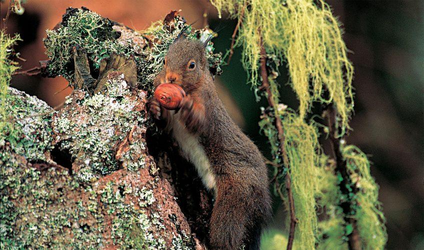Pourquoi l'écureuil fait-il des stocks de nourriture? - La Salamandre