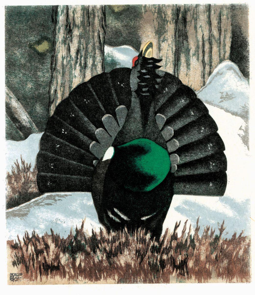 Gros Mésange noir coq