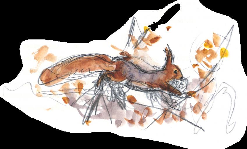 A quoi ressemble le nid de l'écureuil? - La Salamandre