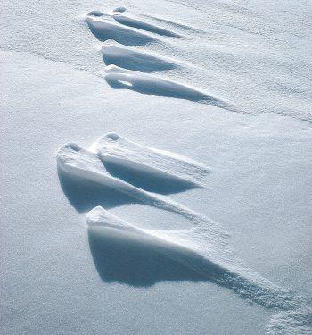 traces de lièvre dans la neige