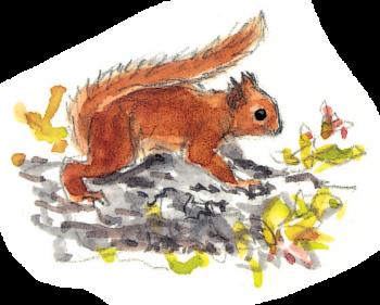 Le cycle de vie de l'écureuil - La Salamandre