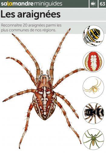 Miniguide 63 : Les araignées
