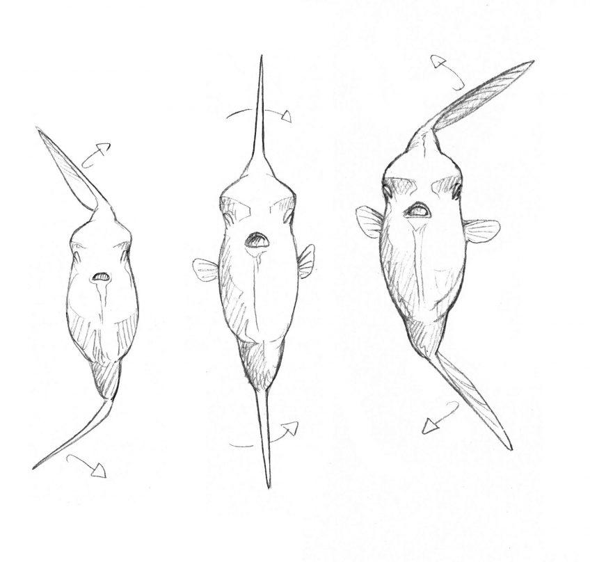 Schéma de la nage du poisson-lune