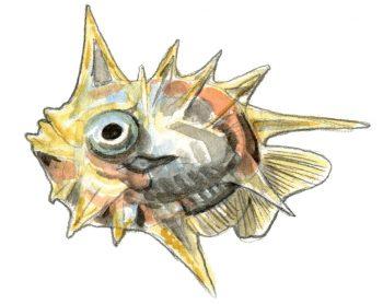 Alevin de poisson-lune