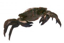 Le crabe vert Voilà un habitant de la côte rocheuse, très commun et facile à observer. Afin d'étudier le détail de sa morphologie, je me suis permis de le capturer et l'ai placé dans un récipient en acrylique. Après l'avoir dessiné sous tous les angles, je l'ai relâché. Concarneau (29), le 22 septembre 2005 / © Sculpture : Tsunéhiko Kuwabara Photographie : Jean-Baptiste Lardenois