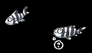 Parasite du poisson-lune