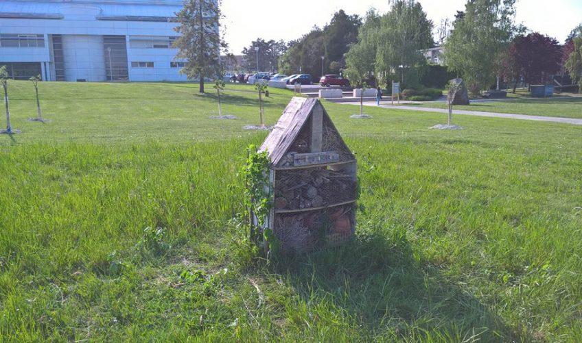 Le campus de la faculté des sciences de Reims se met au vert ! - La Salamandre