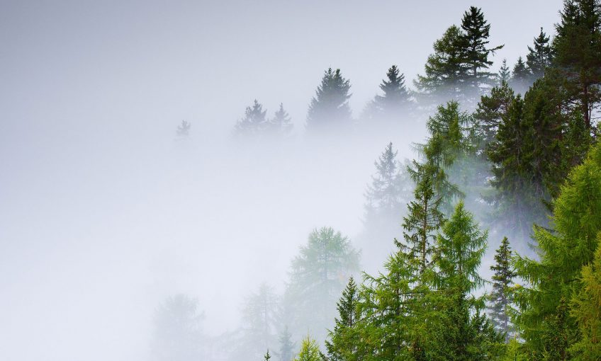 Comment le sol des forêts réagit après une pluie aicde ? - La Salamandre